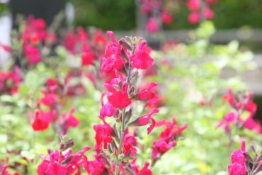 CIT Plant Sale this weekend