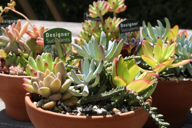 CIT_Plant_Sale_8.jpg